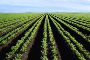 agriculture-marocaine